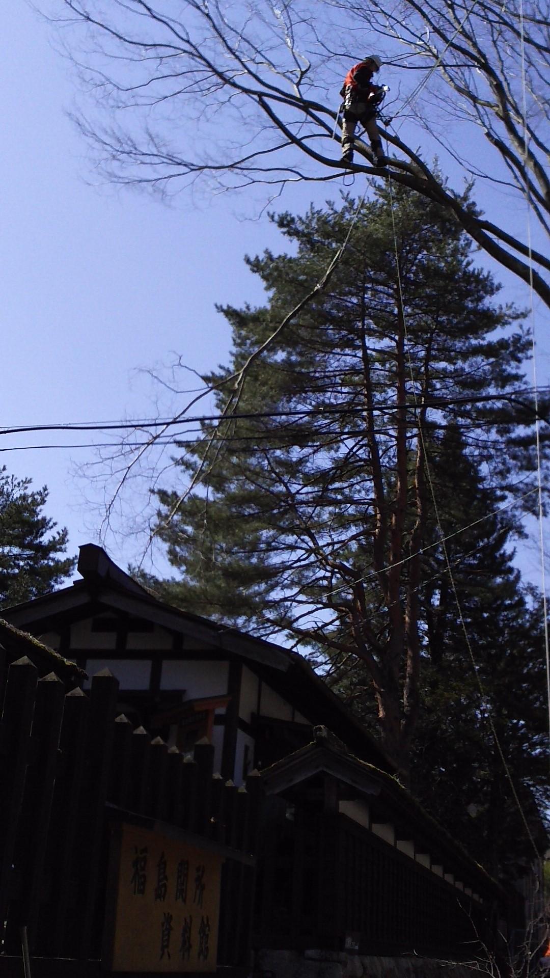昇木での枝の処理