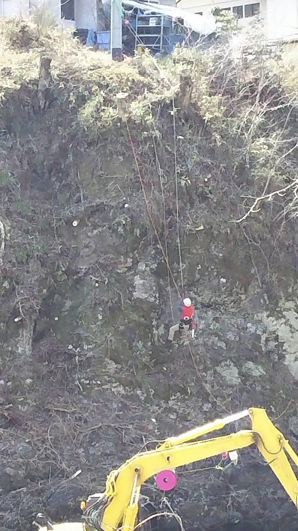 ロープワークでの伐採作業