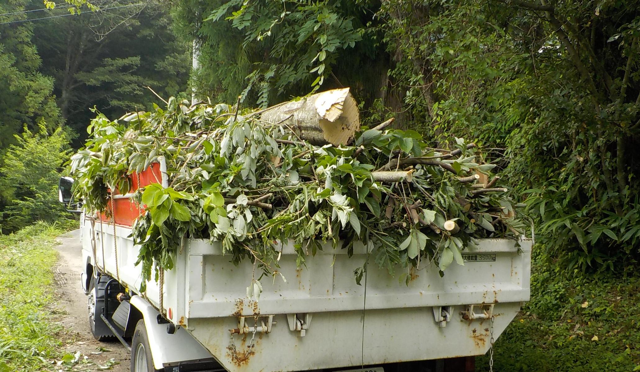 ダンプにて伐採木運搬